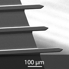 SEM image of 3 tipless AFM cantilevers on NSC series chip
