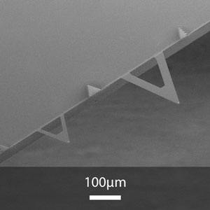 SEM image of XNC12 series AFM cantilevers